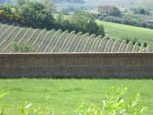 Giovanni's Vineyard